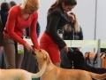 Aurinkoinen Koira Belleza Unica for Fiamma Cantante_Feb'16_4