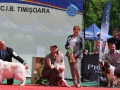 2xCACIB_Timisoara_3