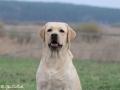 Aurinkoinen Koira Belleza Unica for Fiamma Cantante_Apr'18_2