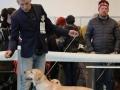 Aurinkoinen Koira Belleza Unica for Fiamma Cantante_Feb'16_1