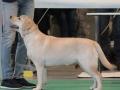 Aurinkoinen Koira Belleza Unica for Fiamma Cantante_Feb'16_3