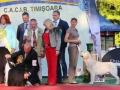 2xCACIB_Timisoara_6