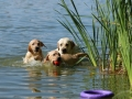 Litter M-4. The first swimming and hunting lessons_14