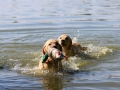 Litter M-4. The first swimming and hunting lessons_4