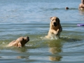 Litter M-4. The first swimming and hunting lessons_9