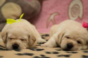Фото щенков в 3 недели