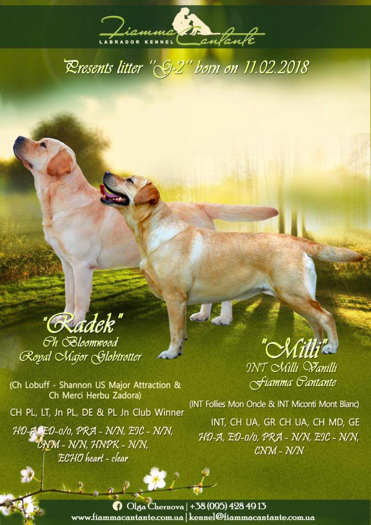 Информация о щенках помета G-2