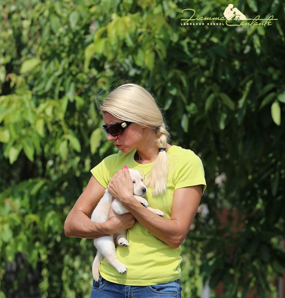 Лабрадор фото щенки