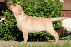 FOR SALE: Mystic Moonlight Fiamma Cantante – 2,5 months