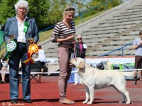 30.05.15 Tallinn, Estonia. Labrador Retrievers Specialty Show.