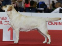 World Dog Show 2015, Milan, Italy: Mademoiselle Miracle For Fiamma Cantante Black Cresset – CLASS WINNER