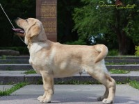 MALE FOR SALE: Mystic Moonlight 3 month. NEW PHOTOS