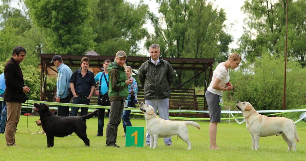 CAC. Kyiv, 28 May, '2016. Hunter Cup. Judge Zlatko Jojkic  (SRB)