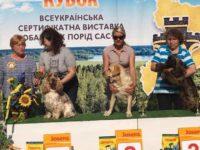 Двойной успех в Ровно