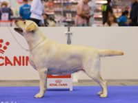 EURO DOG SHOW, Ukraine, Kiev 26.08.2017