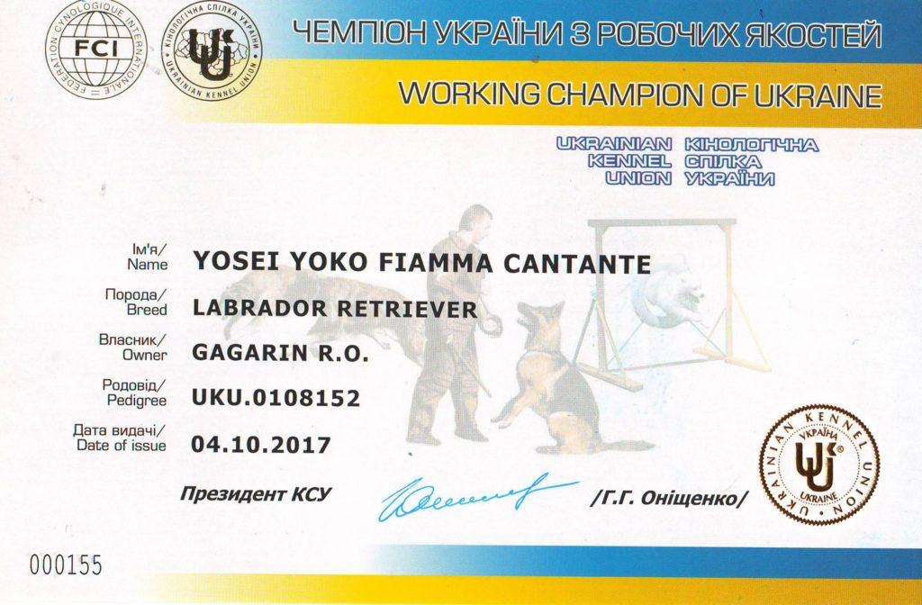 Yosei Yoko Fiamma Cantante – новый Чемпион Украины по рабочим качествам