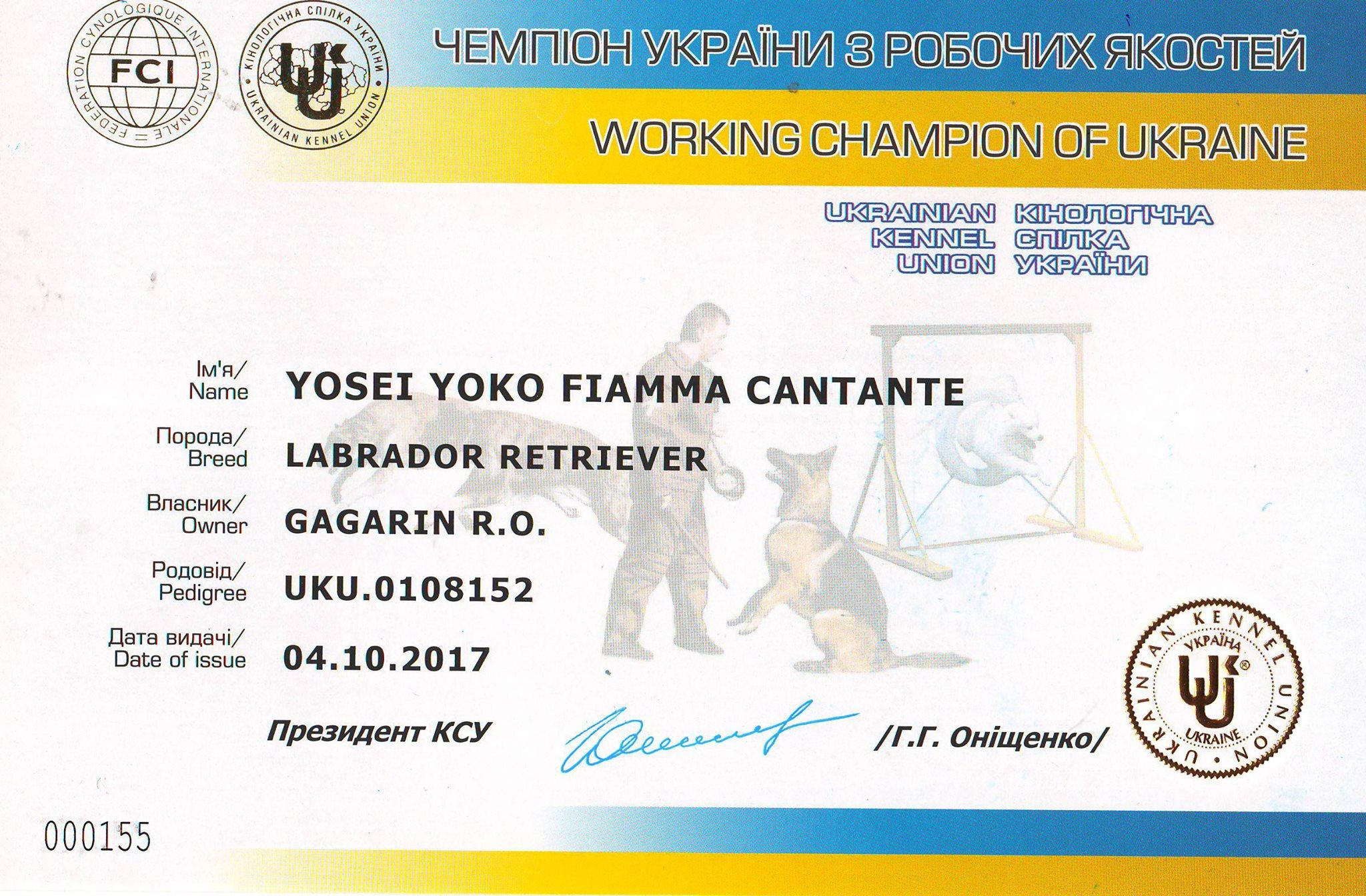 Yosei Yoko Fiamma Cantante_Working Champion