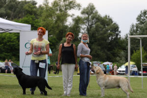 На выставке в Черновцах мы показали молодых собак питомника