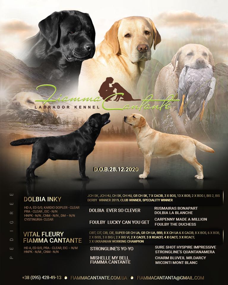 Открытка щенков